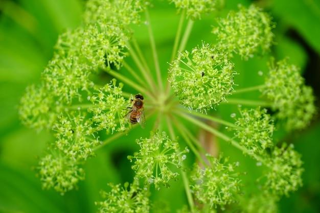 흰 꽃에 벌의 근접 촬영 샷
