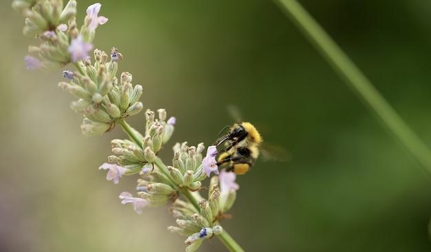 꽃에 앉아 꿀벌의 근접 촬영 샷