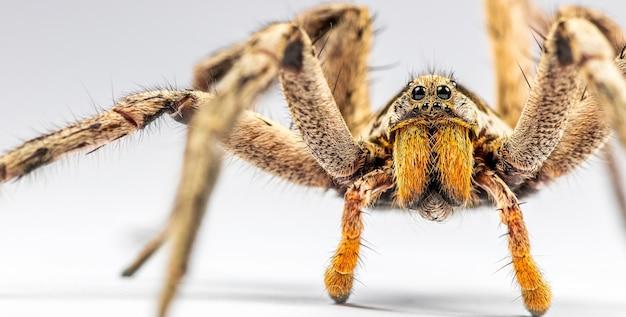 흰색 표면에 큰 거미의 근접 촬영 샷
