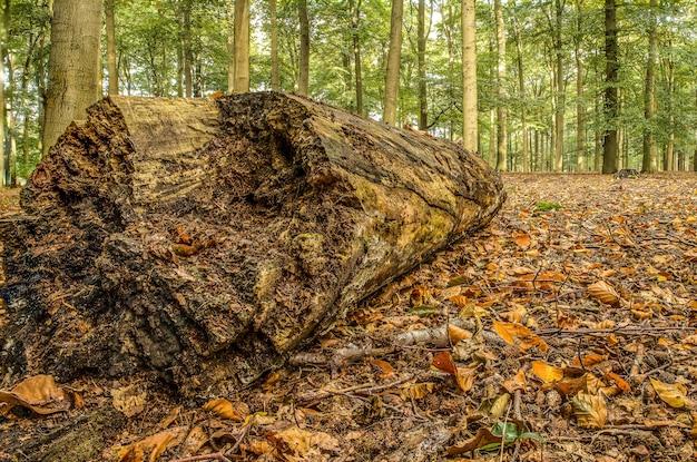 Крупным планом снимок большого деревянного бревна посреди леса, полного деревьев, в прохладный день