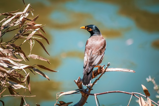 小枝にとまる鳥のクローズアップショット