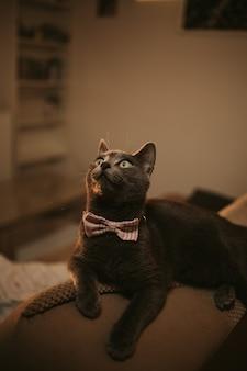 Снимок крупным планом черной кошки с зелеными глазами