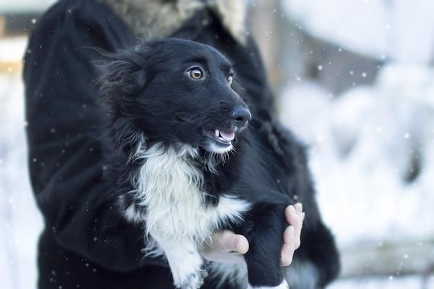 Крупным планом снимок черной собаки под снежной погодой, смотрящей в сторону