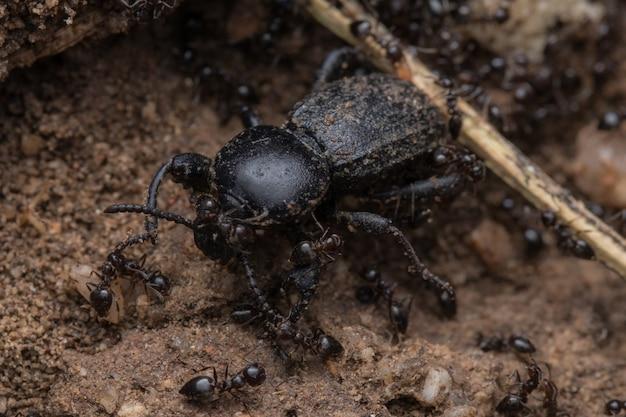 개미 근처 검은 곤충의 근접 촬영 샷