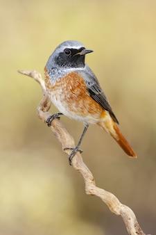 흔들리는 새의 근접 촬영 샷은 흐린 배경으로 지점에 자리 잡고