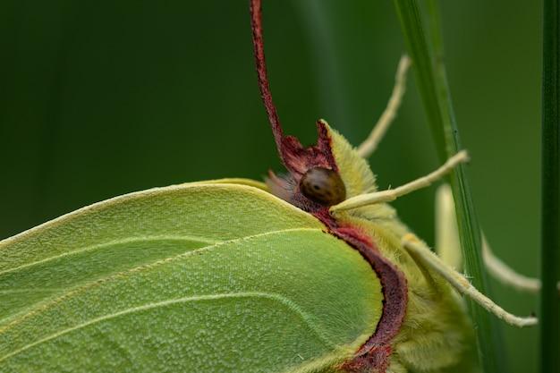 식물에 유황의 근접 촬영 샷