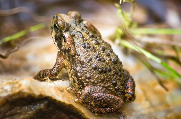 Снимок коричневой жабы на траве крупным планом - идеально подходит для фона