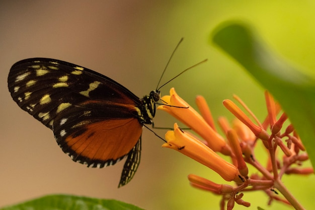 Снимок крупным планом бабочки, сидящей на цветке с размытым фоном