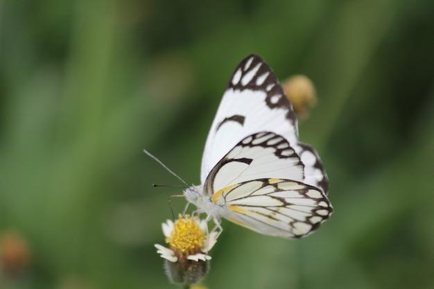 Снимок крупным планом бабочки, сидящей на цветке