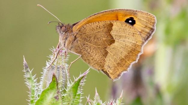 식물에 앉아 나비의 근접 촬영 샷