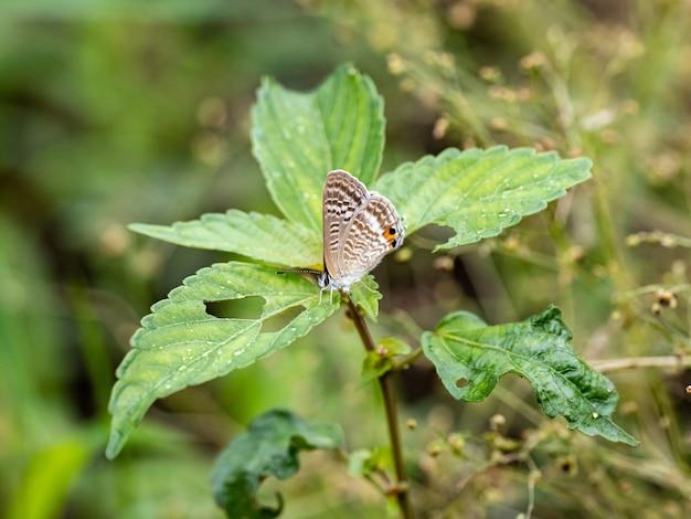 식물 잎에 아름답고 독특한 날개를 가진 나비의 근접 촬영 샷