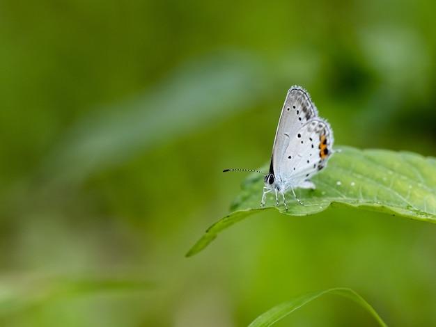 일본 공원에서 흰 날개를 가진 나비의 근접 촬영 샷