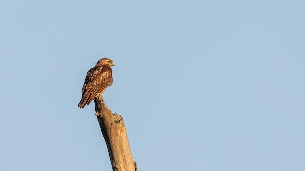푸른 하늘 배경에 로그에 자리 잡고 독수리의 근접 촬영 샷