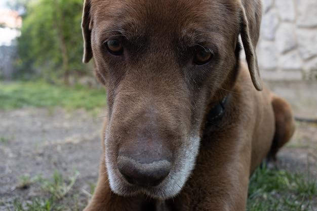 잔디 덮인 땅에 누워 귀여운 갈색 강아지의 근접 촬영 샷