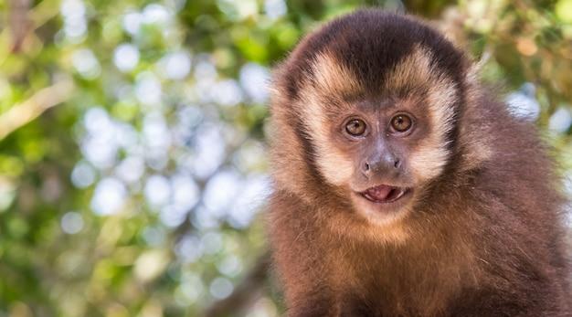 귀여운 카푸친 원숭이의 근접 촬영 샷