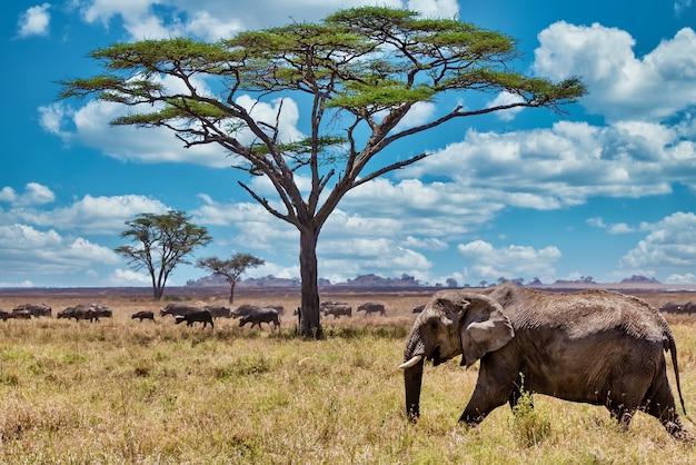 Снимок крупным планом милого слона, идущего по сухой траве в пустыне