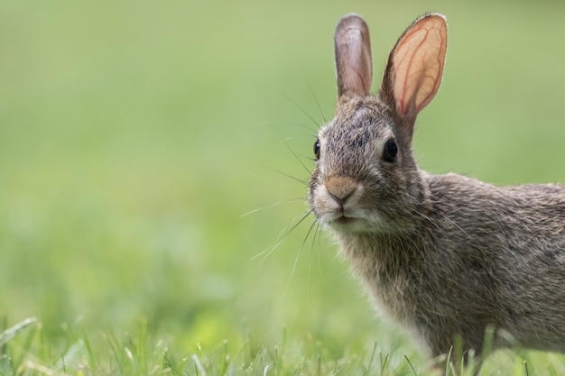 Снимок крупным планом милый серый кролик