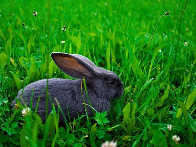 Снимок крупным планом милый маленький кролик на траве