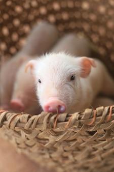 かごの中のかわいい子豚のクローズアップショット