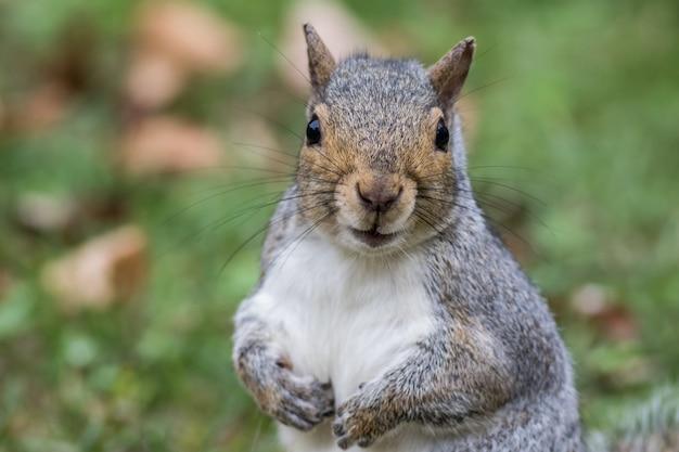 숲에서 귀여운 다람쥐의 근접 촬영 샷