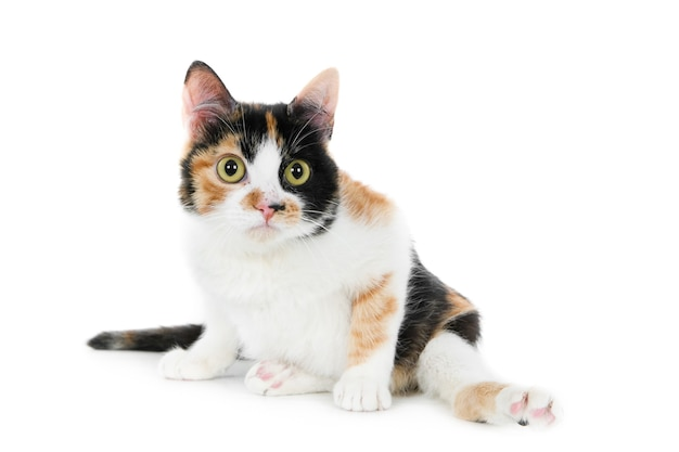 Крупным планом снимок симпатичного белого и коричневого кота изолированы
