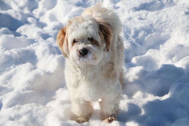 눈 속에서 귀여운 흰색 솜 털 강아지의 근접 촬영 샷