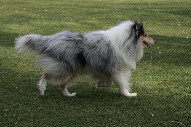 Снимок крупным планом собаки, гуляющей в парке