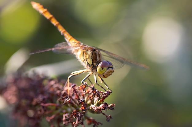 Снимок стрекозы крупным планом