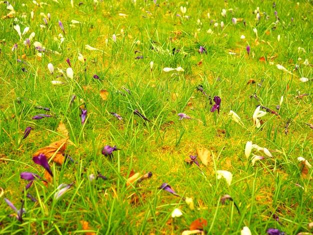昼間の花や草のフィールドのクローズアップショット