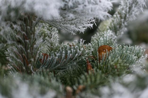 Снимок крупным планом ветки ели, покрытой снегом