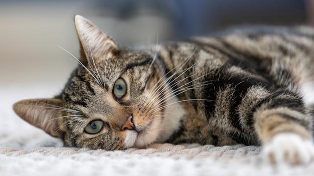 Снимок крупным планом пушистого полосатого котенка, лежащего на кровати