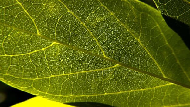 Крупным планом выстрел из свежих зеленых листьев текстуры