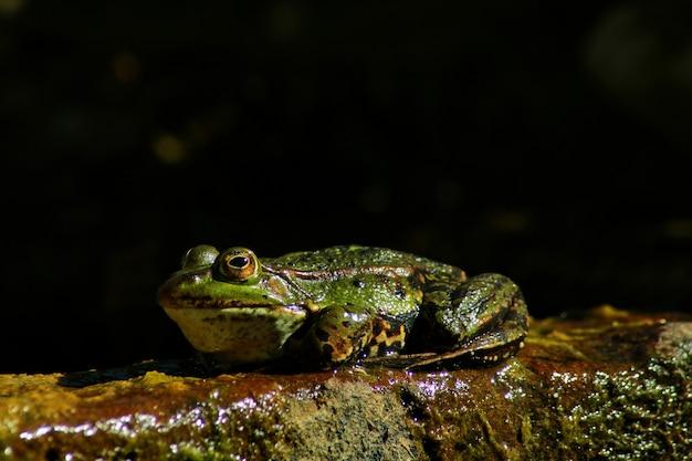 자연의 끈적끈적한 표면에 있는 개구리의 근접 촬영