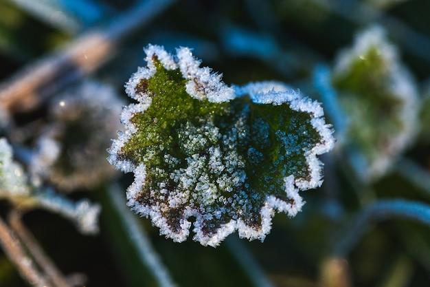 낮에 자그레브, 크로아티아의 막시 미르 공원에서 얼어 붙은 잎의 근접 촬영 샷