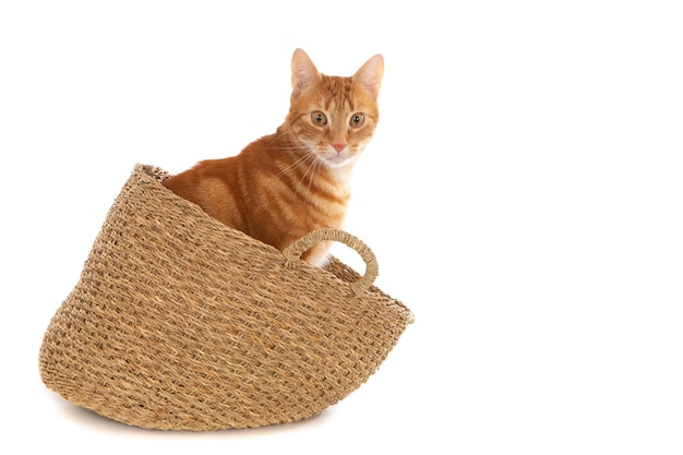 Крупным планом рыжий кот в плетеной корзине, изолированной на белой стене