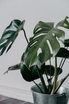 Крупным планом снимок зеленого искусственного комнатного растения