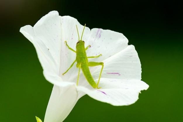 흰 꽃에 녹색 메뚜기의 근접 촬영 샷