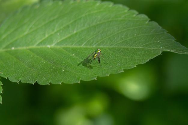 葉の上の緑のホバーフライのクローズアップショット
