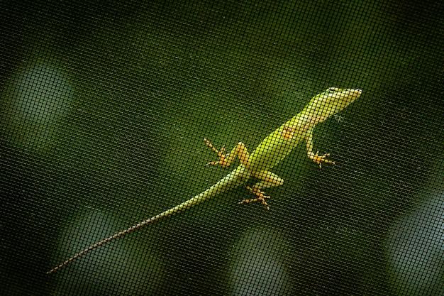 Снимок крупным планом зеленой ящерицы на металлической сетке