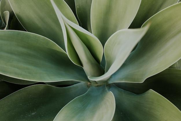 大きな葉を持つ緑の植物のクローズアップショット-壁紙に最適