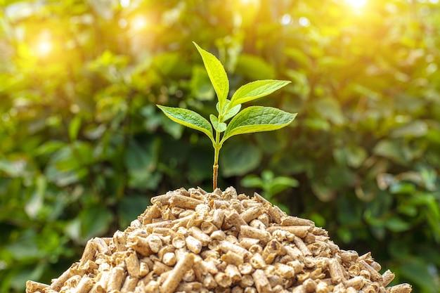 木質ペレットの山の中の緑の苗のクローズアップショット