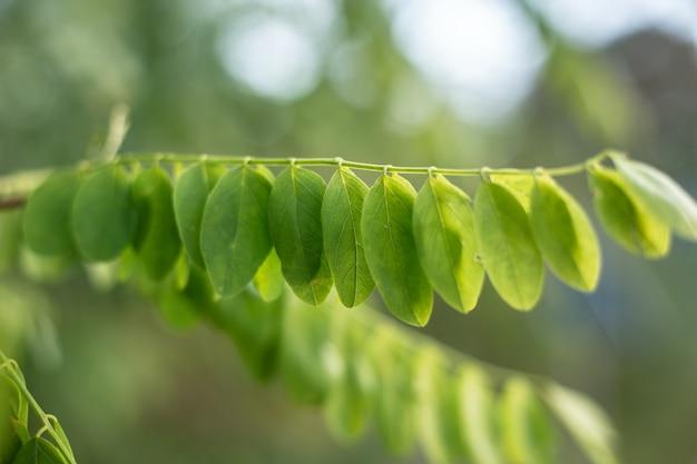 Bokeh 배경으로 녹색 여름 나무 단풍의 근접 촬영 샷