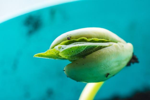 토양에서 성장하는 녹색 젊은 식물 새싹의 근접 촬영 샷