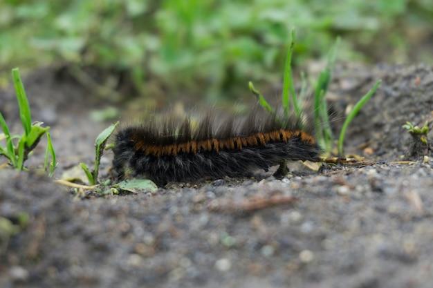 Крупным планом выстрелил волосатая гусеница на земле