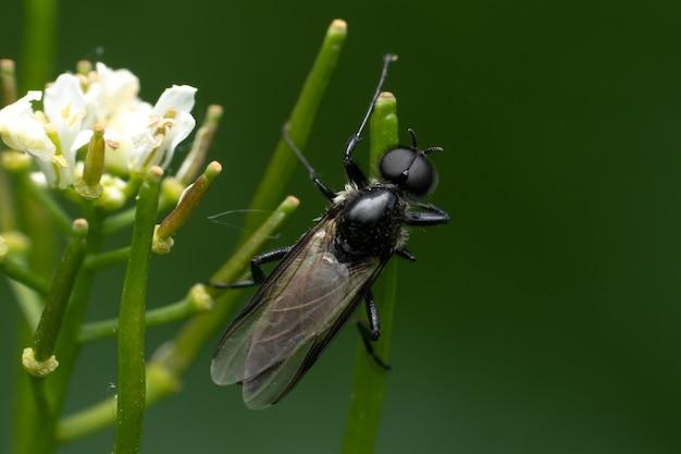 녹색 식물에 말벌의 근접 촬영 샷