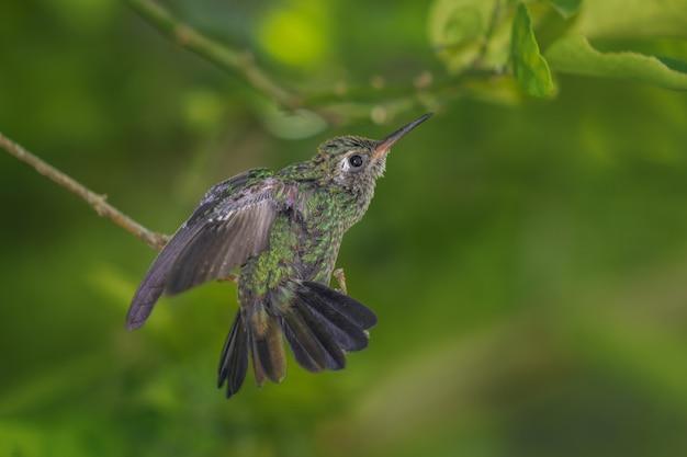 Снимок колибри, сидящей на ветке дерева на размытом фоне