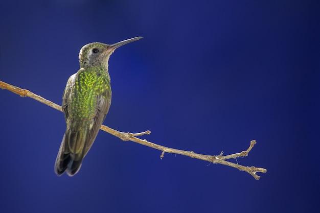 Снимок колибри, сидящей на ветке дерева на размытом фоне крупным планом