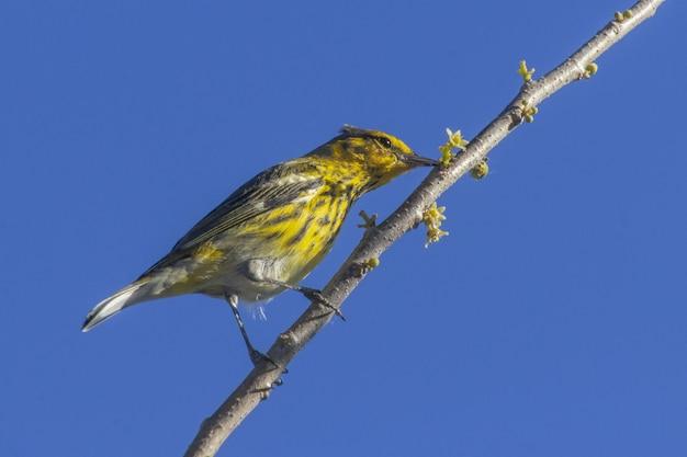 Снимок колибри на ветке дерева крупным планом Бесплатные Фотографии