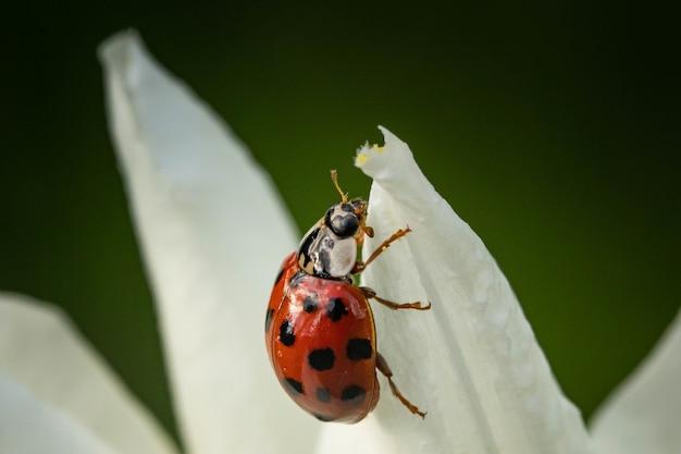 꽃의 꽃잎에 앉아 있는 무당벌레의 근접 촬영 샷