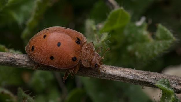 잎에 무당 벌레의 근접 촬영 샷